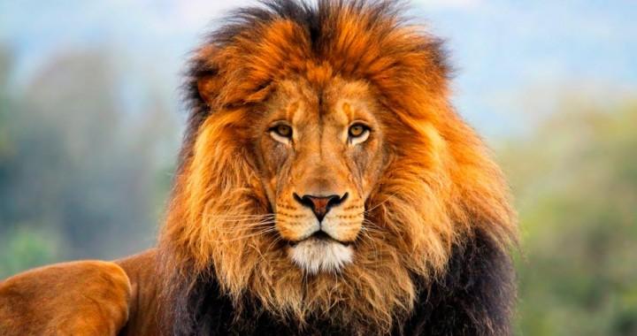 fuchi-leoni
